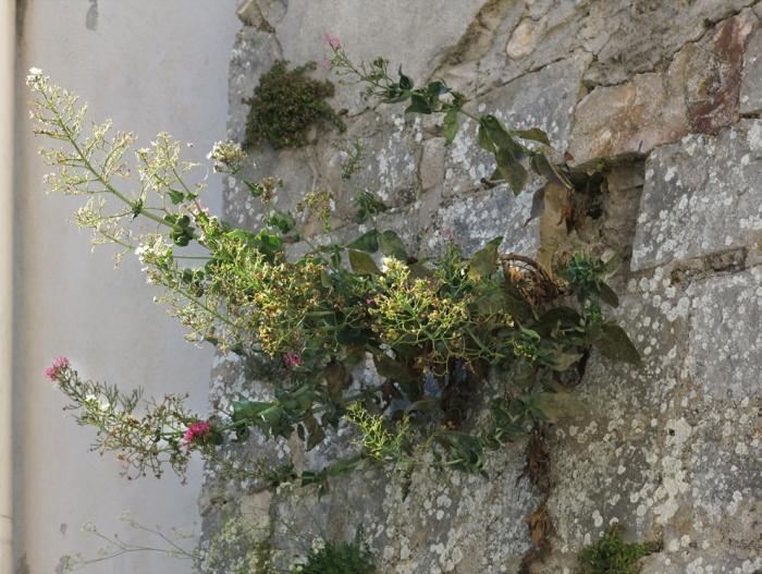Wall Garden  Monte Sant'angelo2